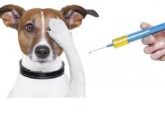 Hirdetmény ebek veszettség elleni védőoltásáról